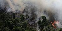 Конференция католических епископов Бразилии призвала к борьбе с лесными пожарами и расхищением природных богатств страны