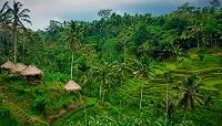 Крупнейшая исламская страна решила перенести столицу в джунгли